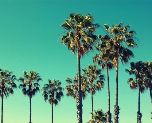 organic to green palms